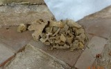 Lidské pozůstatky nalezené při výkopu žlabu pro novou elektroinstalaci.
